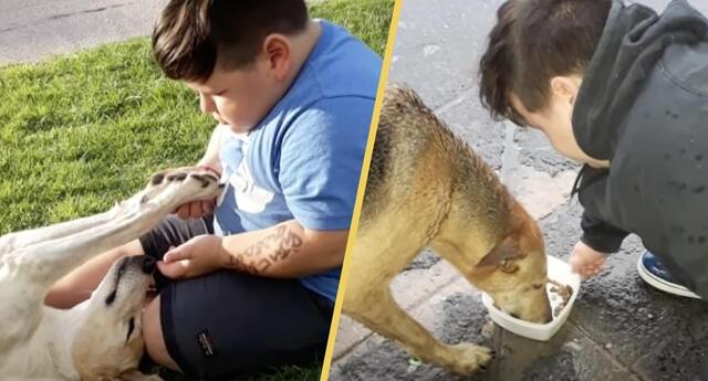 Niño de 5 años rifa sus pertenencias para salvar y alimentar animalitos callejeros