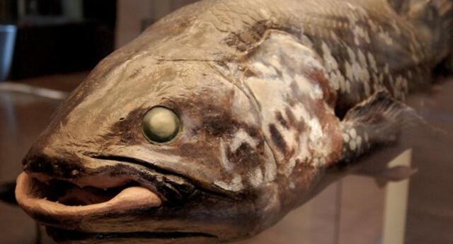 """¡Aparece """"Pez fantasma""""! Salen a la superficie peces de más de 420 millones de años"""