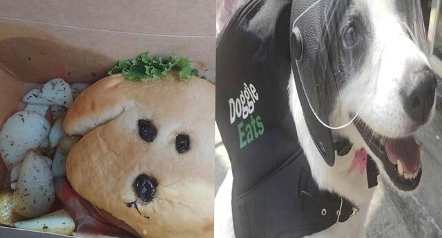 Esta es Any, la perrita que reparte comida delivery, para recaudar fondos