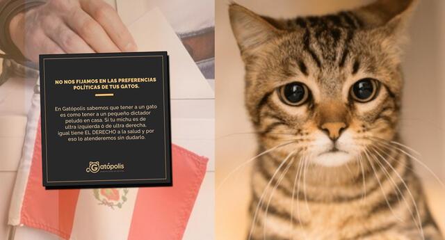 La veterinaria Gatópolis asegura que atenderán a los mininos sin ninguna distinción.