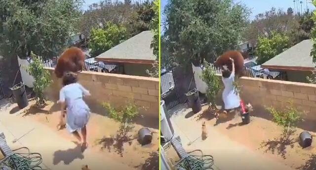 Mujer salva a sus perros de una osa que se infiltró en su vivienda.